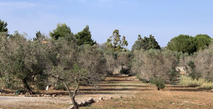 Terreno agricolo in Località Mauri a Sannicola